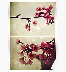 Spring - Cherryblossom Pink Poster