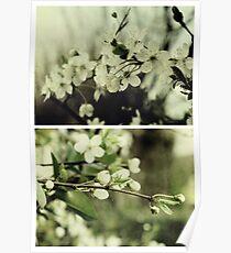 Spring - Cherryblossom Green Poster