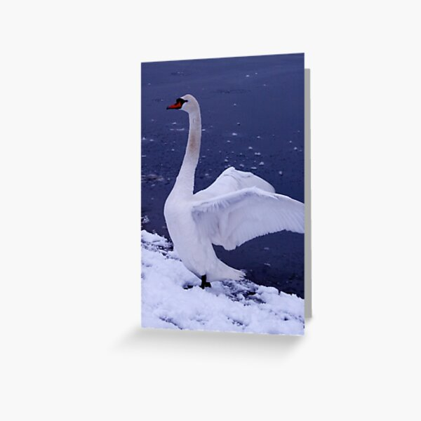 Swan in the Snow Greeting Card