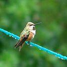 Bird On A Wire by Jann Ashworth
