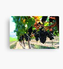 Fiddlestix Vineyard Canvas Print