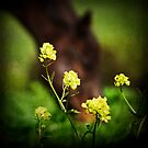 Dreaming of Spring by Laura Palazzolo