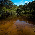 Ingar Waterhole by John Buxton