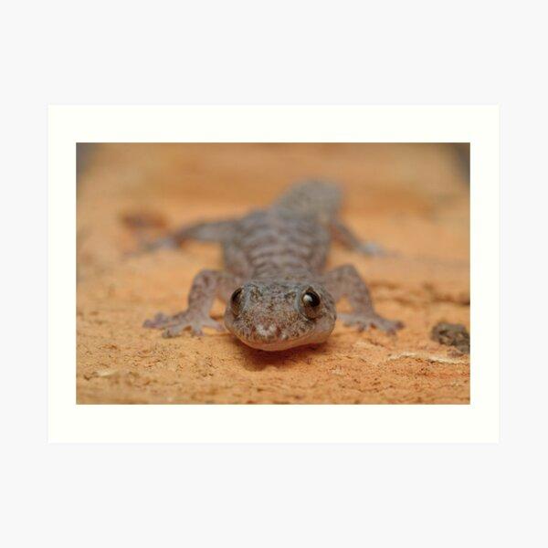 Lesueur's Velvet Gecko Art Print