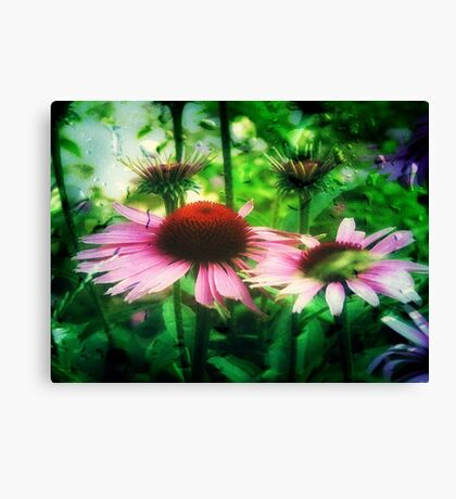 Cone Flowers ©  Canvas Print
