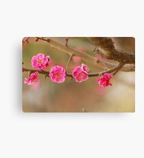 spring series one Canvas Print
