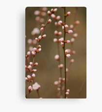 spring series two Canvas Print