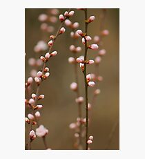 spring series two Photographic Print