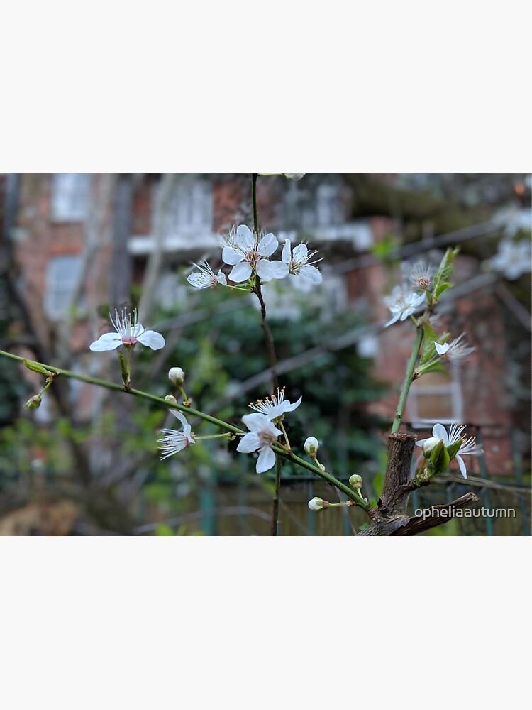 Spring in Hampstead Heath by opheliaautumn