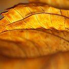 Hydrangea Leaf Edge by Anna Lisa Yoder