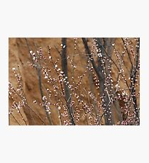 spring series five Photographic Print