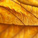Hydrangea Leaf Macro by Anna Lisa Yoder