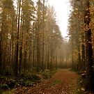 Forest Path, Finland by HeatherMScholl