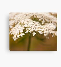 """Reminisence of an old lace bonnet"" - an elder flower Canvas Print"