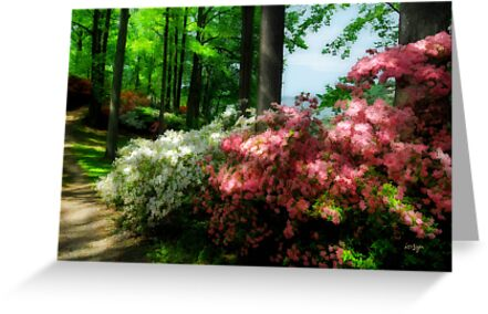 Along the Path by Lois  Bryan