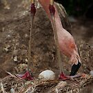 Egg of the Flamingo by Kathy Cline