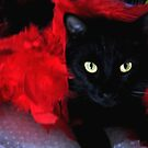 *  Meow-lin Rouge * by Magicat