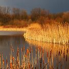 Quakertown Marsh Before a Storm by Anna Lisa Yoder
