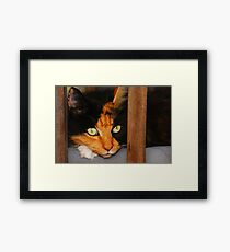 The Afghan Cat. Framed Print
