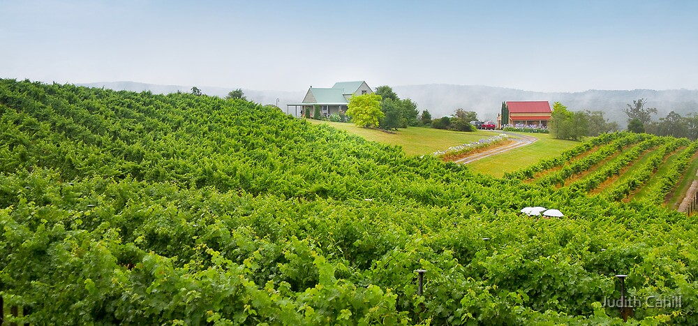 Tom Cap Winery by Judith Cahill