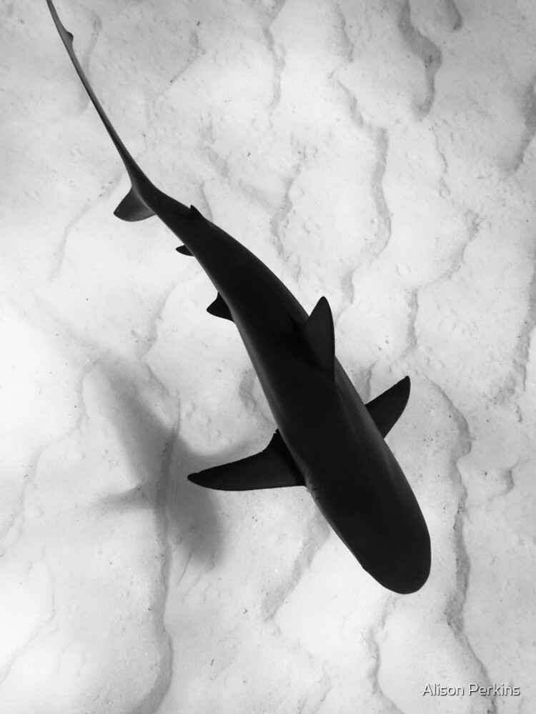 Shark in silhouette by AlisonPerkins