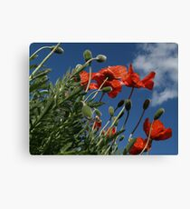 Red Poppies from Below - Quakertown Canvas Print