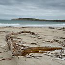 Driftwood at Jolly's Beach by catdot