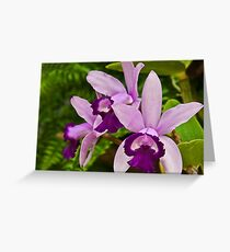 Cattleya Orchid Greeting Card