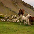 Horses by Þórdis B.