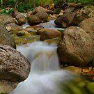Even Flow...Eurobodalla, MT Buffalo. by Petehamilton