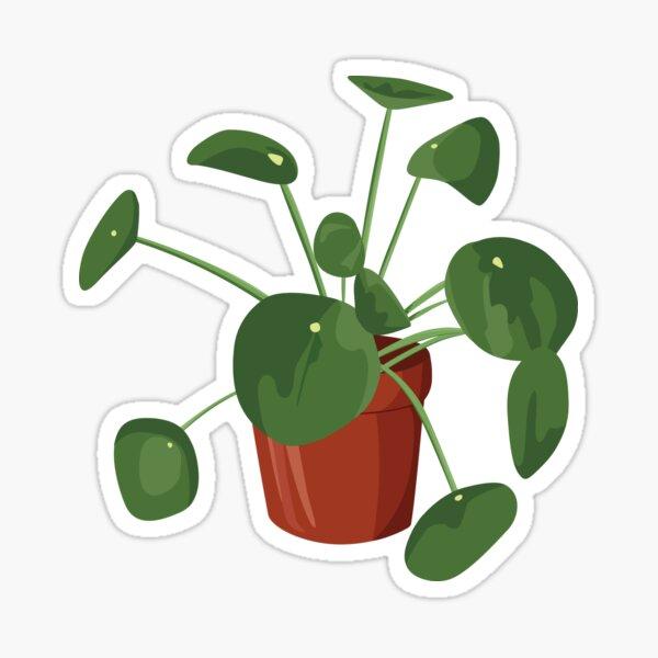Green Pilea Plant in Terra Cotta Pot Sticker