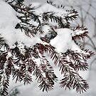 Life in the Snow von Celeste Thinks