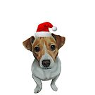 Christmas  Jack Russell Terrier by cathyscreations