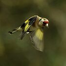 In Flight Goldfinch by Russell Couch
