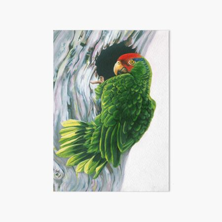 Red Crowned Parrot Art Board Print