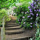 Steps by John Hare