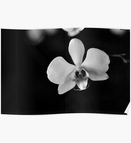 Black & White Orchid Poster