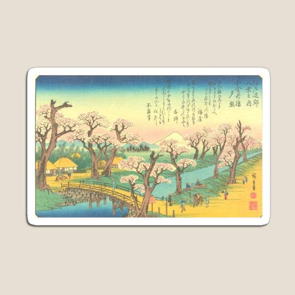 Flowering cherries along the river bank Magnet