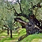 Olive trees - Zakintos  Greece. by Brown Sugar . Views (406) Thank you friends ! by © Andrzej Goszcz,M.D. Ph.D
