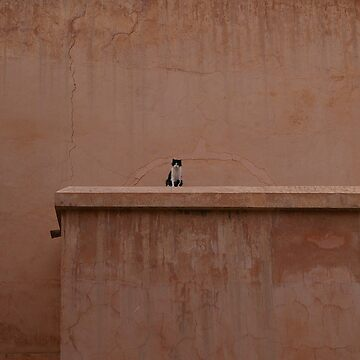 Cat at the Saadian Tombs - Guardian by becca305