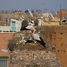Storks on the palace walls, Marrakech by Rebecca Silverman