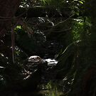 Olivers Creek - Olivers Creek reserve, Tyabb by Dave Callaway