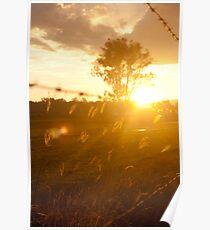 Sunset at Freemans Reach Poster