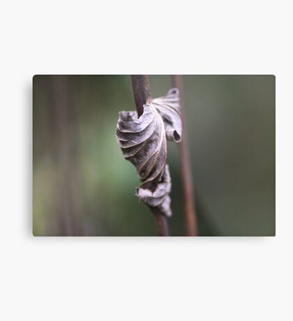 See the Beauty in a Dead Leaf Metal Print