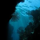 Gorgonian swim through by Reef Ecoimages