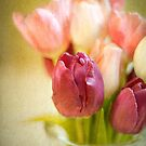 Happy Mother's Day with Tulips by eyeshoot