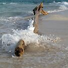 Driftwood and Wave by Reef Ecoimages