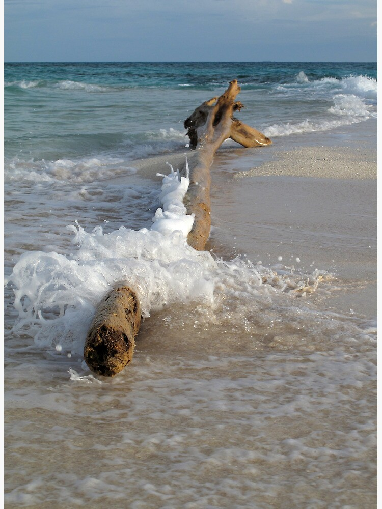 Driftwood and Wave by neoniphon