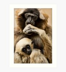 Pileated Gibbon Art Print