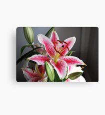 Flower Stargazer Lily Canvas Print